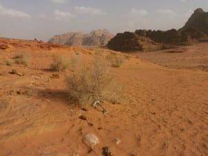 Wadi Rum - where Lawrence of Arabia raised his troops